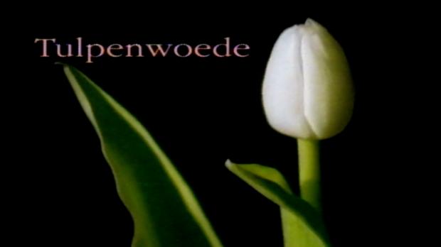 tulpenwoede